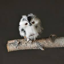 for some reason i a new found fascination for owls so