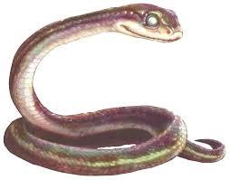 Plains Blind Snake Horace Plithiver Books Guardians Of Ga U0027hoole Wiki Fandom