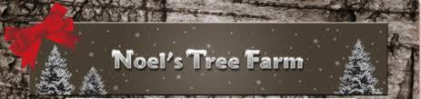 noel u0027s tree farm cut your own christmas tree new hampshire