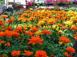 flower plant nursery thenurseries