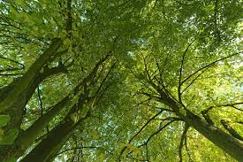 are trees sentient beings certainly says german forester yale e360