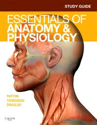 Anatomy And Physiology Study Tools Study Guide For Essentials Of Anatomy U0026 Physiology 1st Edition