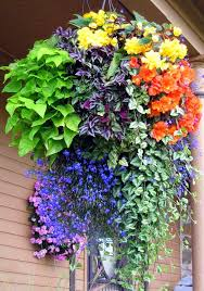 hanging flowers hanging flower basket inspiration hanging flower baskets flower