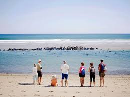 Blue Water On The Ocean Cape Cod - cape cod national seashore beaches biking hiking and more