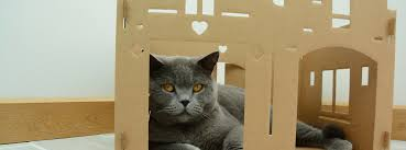 cardboard cat house pros and cons home design warehouse xl cat crib