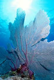 Azure Vase Sponge Facts 10 Best Phylum Porifera Images On Pinterest Sea Sponge The O
