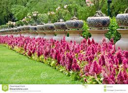 flowers in garden images garden flower in bankok thailand stock image image 26259291