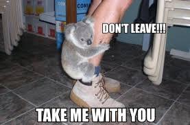Meme Bear - little bear meme