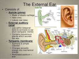 Ear Anatomy Pictures Anatomy Of The Ear