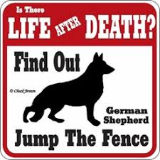 australian shepherd jumping fence jump the fence dog signs dog caution signs