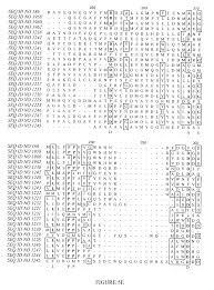 patent us20060162006 polynucleotides and polypeptides in plants