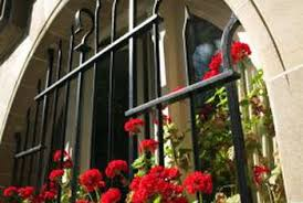How To Save A Dying Plant How To Save Dying Geraniums With Rot Home Guides Sf Gate