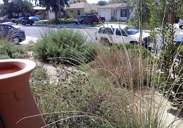 gardening with natives surfrider foundation projects u2013 artemisia landscape architecture