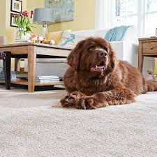 Pet Resistant Rugs Carpet Buying Guide