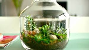 ecosystem in bottle only watered once in 50 years youtube