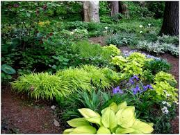 Backyard Low Maintenance Landscaping Ideas Backyards Charming Low Maintenance Backyard Landscaping Low