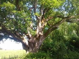 celtic trees workshop to help reconnect with nature and yourself
