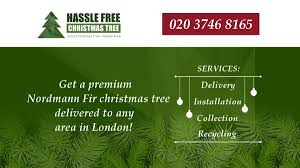 hassle free christmas tree christmas trees amethyst road