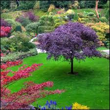 best 25 purple trees ideas on nature tree trees