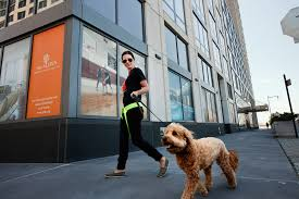 buildings rolling out dog day care the new york times