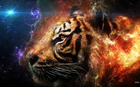 tiger hd desktop wallpapers