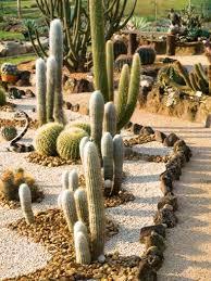 cactus garden designs custom decor cool cactus garden designs