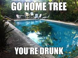Tree Meme - drunk tree go home you are drunk know your meme