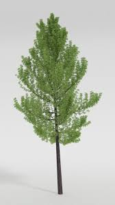 realistic trees how to draw realistic plants 搜索 how to