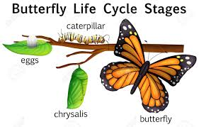 butterfly clipart 134 68 butterfly clipart clipart fans