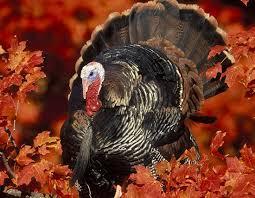 best 25 turkey population ideas on population of