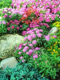 89 best groundcovers u0026 rock gardens images on pinterest