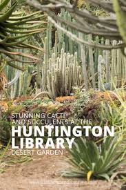Huntington Botanical Garden by Succulents And Cacti At The Huntington Library Gardens