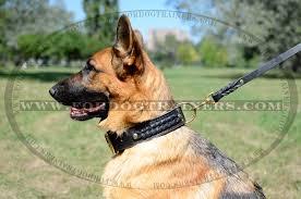 australian shepherd neck size get german shepherd braided leather dog collar