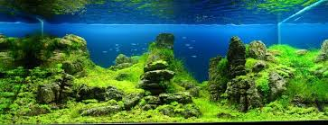 Aquascaping Competition Manage Your Freshwater Aquarium Tropical Fishes And Plants