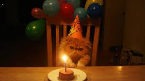 birthday cat wonders what evil man would set its birthday tuna on fire