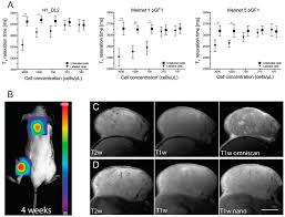 ijms free full text a novel nanoprobe for multimodal imaging