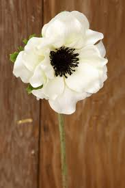 anemone flowers anemone spray