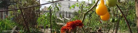 Urban Gardening Philadelphia - urban farming ventures in philadelphia farming philly