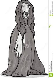 afghan hound jackets afghan hound dog cartoon illustration stock photography image