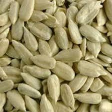 sunflower seeds at rs 60 kilogram sunflower seeds id 3943192312