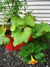 vegetable container gardening design ideas for container