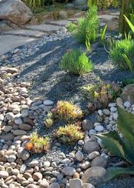alpine rock garden with low growing ground cover and perennials