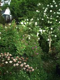 where the catbird sings roses in the southern garden