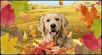 interactive thanksgiving ecards blue mountain