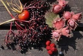 mail order fruit silver stemmed bramble rubus biflorus plants grown in 7 cm pots