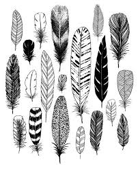 best 25 feathers ideas on feather what are