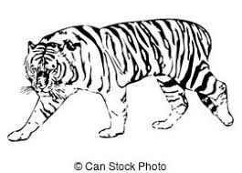 tiger clipart and stock illustrations 21 275 tiger vector eps