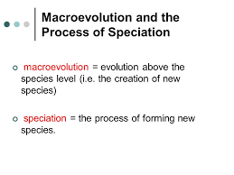 chapter 6 macroevolution and the early primates chapter preview