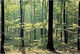 amazon com enchanted forest huge wall mural 12 feet 6 inch wide x