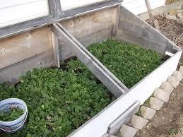 growing vegetables all year long gardenaware com